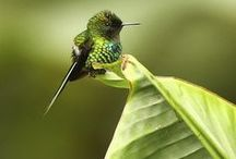 Small Animals and Birds / Colorful birds, insects, fish, and reptiles.
