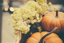 Fall Favorites / by Towne & Reese