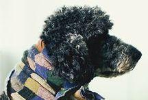 Poodles / Standard Poodle Love!