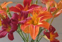 Color Inspiration - Oranges / Tangerine, saffron, marigold, flame... for more color inspiration visit http://www.PoppyGall.com/blog
