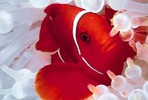 ~ Under The Sea ~ / Beauty Under Our Seas / by Deby Matta DeBruycker