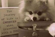 ~POMERANIAN LOVE~ / by Bridget Litten