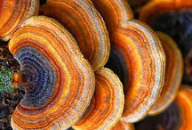 Mushrooms and Fungus / Cool mushrooms and fungus / by Chris Fry