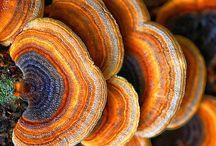 Mushrooms and Fungus / Cool mushrooms and fungus / by Chris Fry