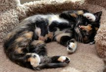 TORTIES & Other Divine Kitties / Love the kitties! =^..^= / by S. Mill
