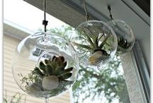 Succulents & Terrarium Ideas! / by Angela Nicole