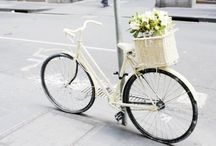 bicycles / by anabela / fieldguided