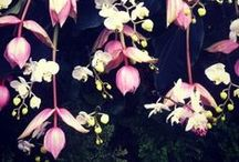 The Orchid Show / #orchidshow