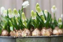 Gorgeous Garden Ideas