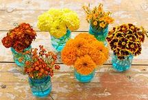 Gardening Tips and Ideas / Amazing ideas and tips to spruce up your outdoor living spaces.
