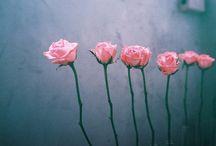 Beauty / by Abby Waide