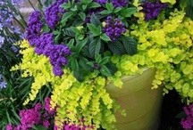 Container Gardening / Tips, tricks, and inspirational garden containers! / by Samantha Spidel