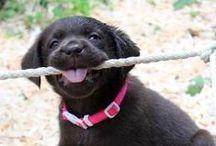 I LOVE Animals / Aww, it's so cute!☺️