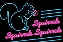 Squirrels / A squirrel is a wonderful thing