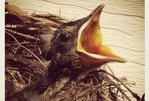 ~Birdies~