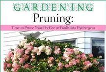 Exterior: Garden 101 / Gardening tips