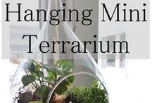 Gardening Indoors & fairy garden ideas / Gardening inside, fairy garden, miniature garden