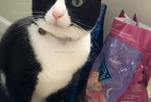 Dana ❤'s Tuxedo Cats / I love tuxedo cats, they are such a special cats with special personalities.  #cat #kitten #bella #pets our Bella is a #rescued #TuxedoCat