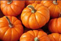 A Pumpkin, A Pumpkin / by Sara Tucker