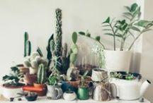 :PLANTS/NATURE: