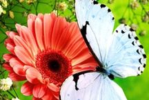 Flowers / by Debi Reed-Hanna