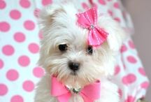 Too darn cute / by Debi Reed-Hanna