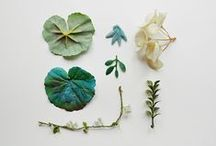COLLECTIONS / Treasures :: Keepsakes :: Inspiration / by Lacelit | Kimberly Taylor-Pestell