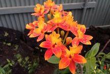 Kauai Flowers / Kauai Flowers