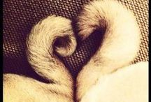 Pug ♡ / by Delilah Nuval