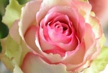 Gardening - Flowers / by Stephanie Williams