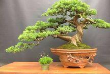 Trees.....I like trees. / I just really like trees... Inspiration for my bonsai development!