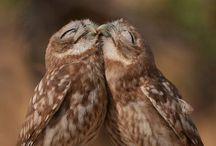 Owls, fascinating creatures... / Owls / by Karie Huisman