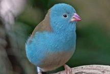 Birdie, Birdie