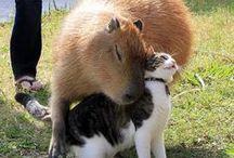 Love Between The Species