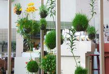 KOKEDAMA / Planter i moskugler
