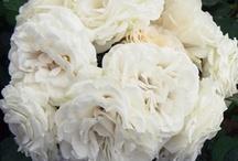 Events: Weddings / by Cassandra Burns