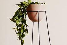 PLANTS/ PLANTERS / by Anna Vignale