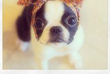 I heart animals / Beautiful animals  / by jessbrooklynluv