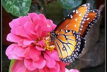Dragonflies and Butterflies... / ...And other Winged Wonders!