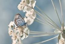 Colors ~ Blue and White