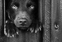 Dog / by Martha Hopkins Skarlinski