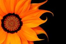 Colors ~ Black and Orange