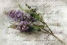 Colors ~ Lavenders & Lilacs