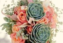 Colors ~ Coral and Green