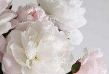 flowers / you can't buy happiness? But you can buy #fowers which is kind of the same to me. #roses #peonies #hydrangeas