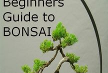 Bonsai / by Klaressa Hobbs
