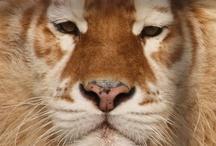 Animal Kingdom  / by Jules Whitlow