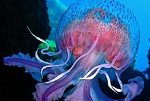Just Jellies / He is my little squishy!-Dora, Finding Nemo.  They are gorgeous. / by Amy Johnson