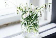 Flowers / by Julia Chestnut&Sage