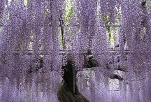 Le Jardin / by Symphonie Fantastique